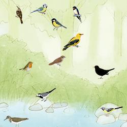 Ocells de riu