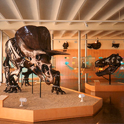 Museu Miquel Crusafont de Paleontologia