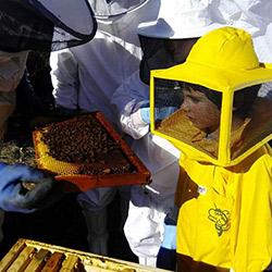 Visites guiades a les abelles de l'Obac